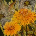 """71. """"Little fat dandelion"""" 10 x 10 cm. 850,- kr."""
