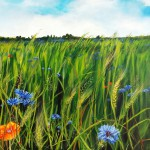 "24. ""Cornflowers in June"". 80 x 80 cm 7500,- kr."